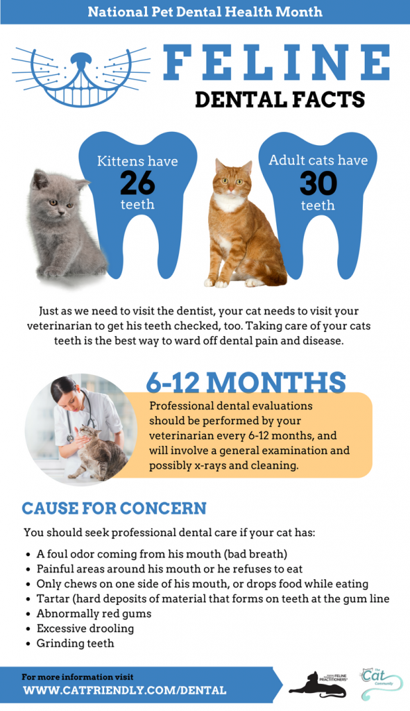 national pet dental health month facts